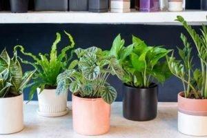 Les meilleures plantes d'intérieur pour purifier l'air intérieur