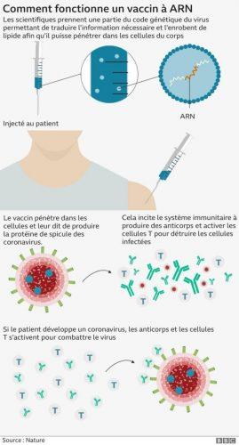 Vaccin contre le coronavirus: comment fonctionne le vaccin Pfizer, quand peut-il donner l'immunité après administration?