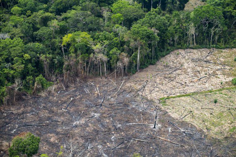 ONU: La déforestation peut entraîner d'autres pandémies